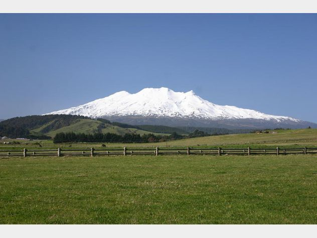 Dating auction website-in-Mount Ruapehu